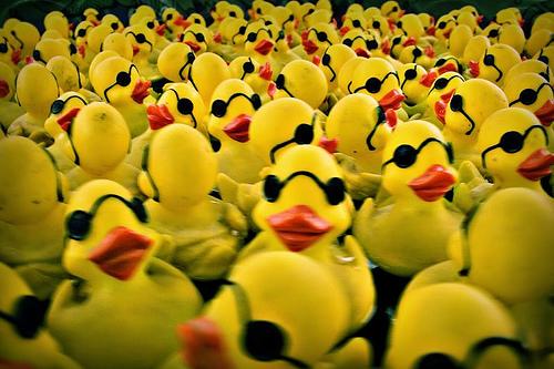 Ducks and Social Media 6